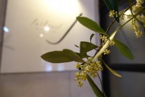 photo: 開花のこと